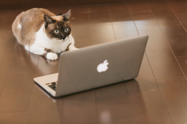 ITを駆使する猫エンジニアの写真