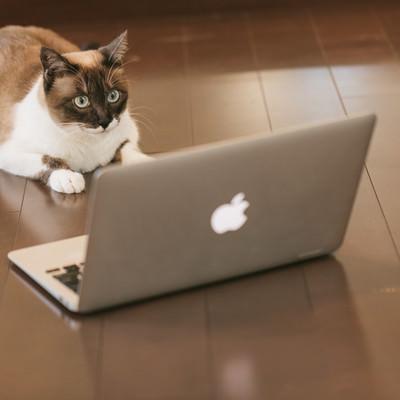 「ITを駆使する猫エンジニア」の写真素材