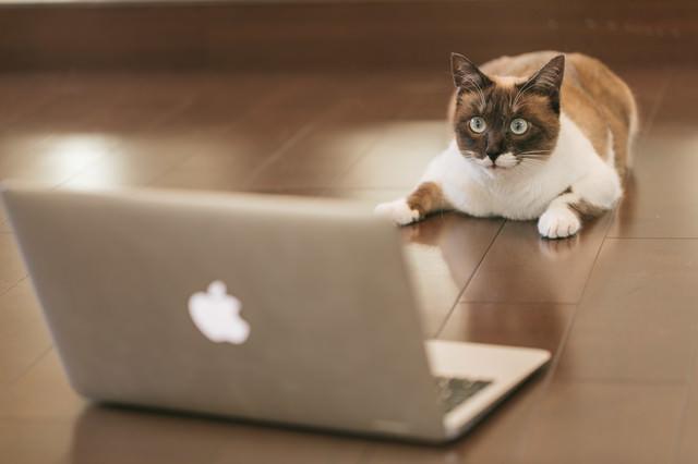 FXで有り金が一瞬で溶けた猫の写真