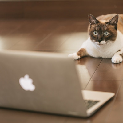 「FXで有り金が一瞬で溶けた猫」の写真素材