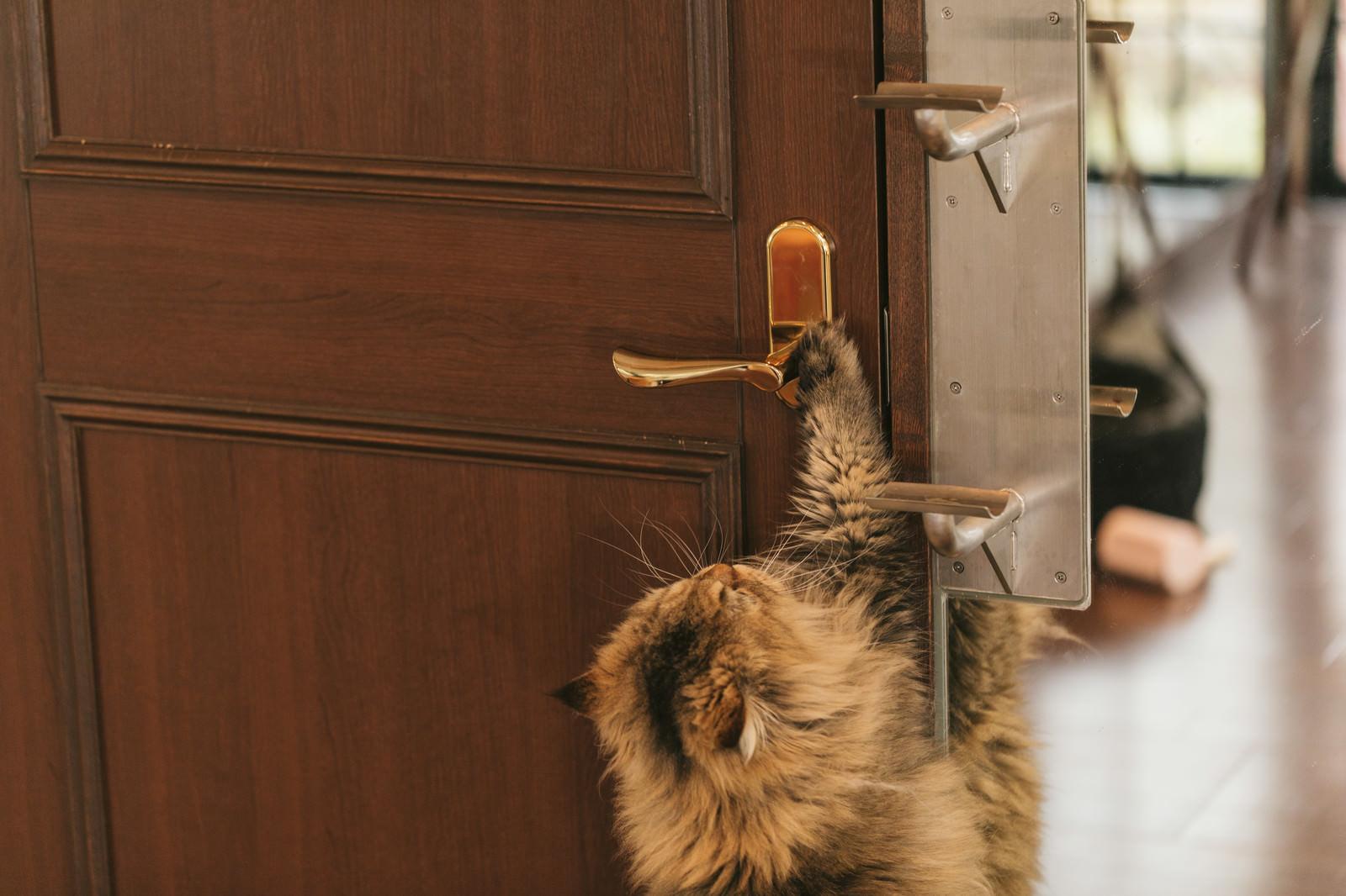 「ドアノブに手をかける猫」の写真