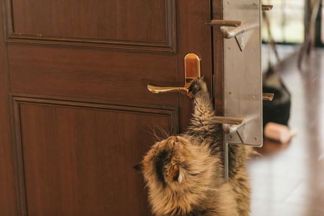 ドアノブに手をかける猫の写真