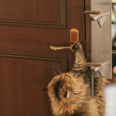 「ドアノブに手をかける猫」の写真素材