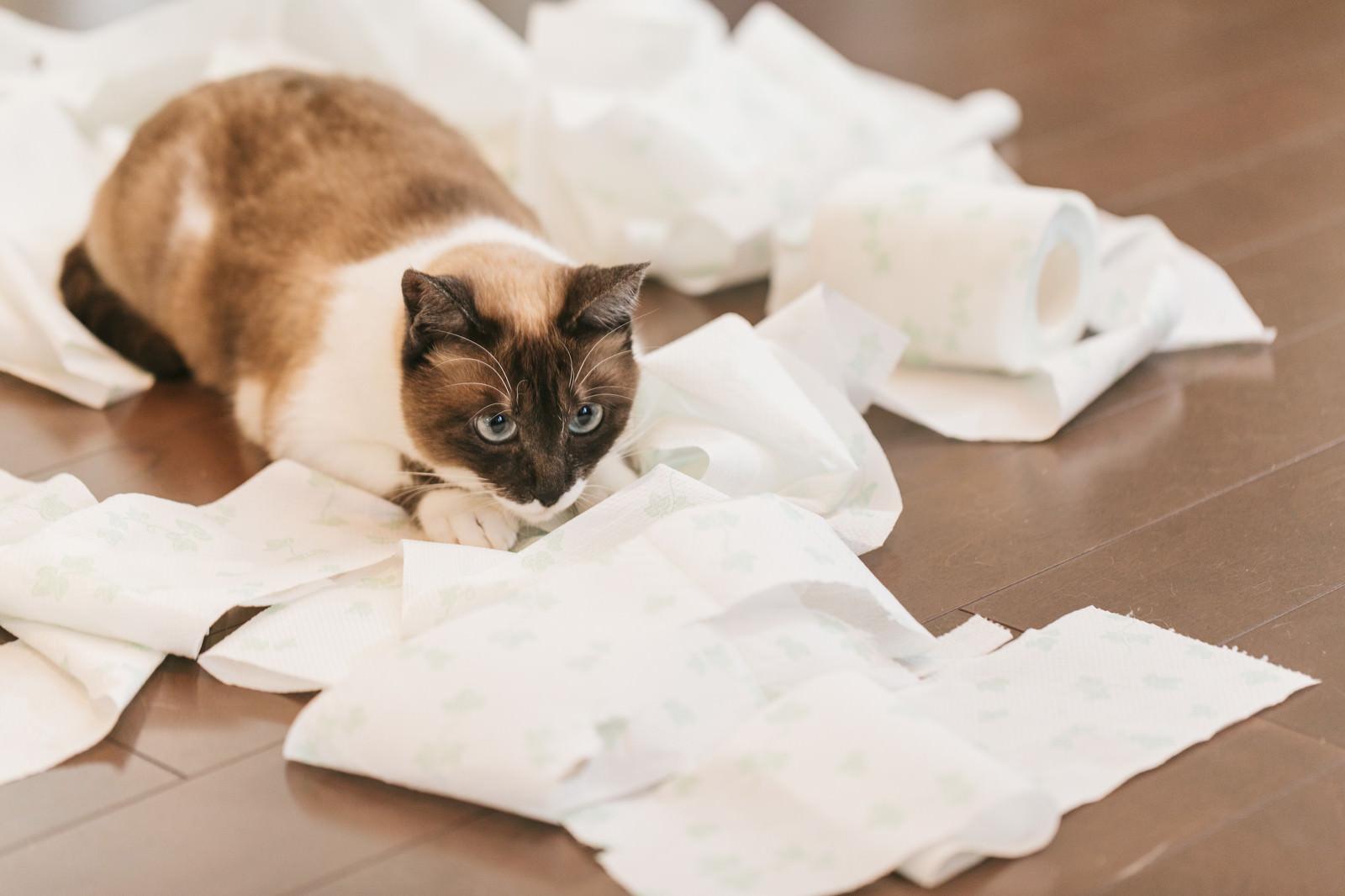 「テッシュを散らかし、満足げな猫」の写真