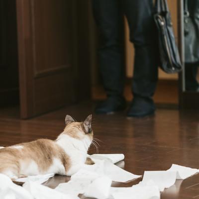 「帰宅したら猫がティッシュでいたずらしていた」の写真素材