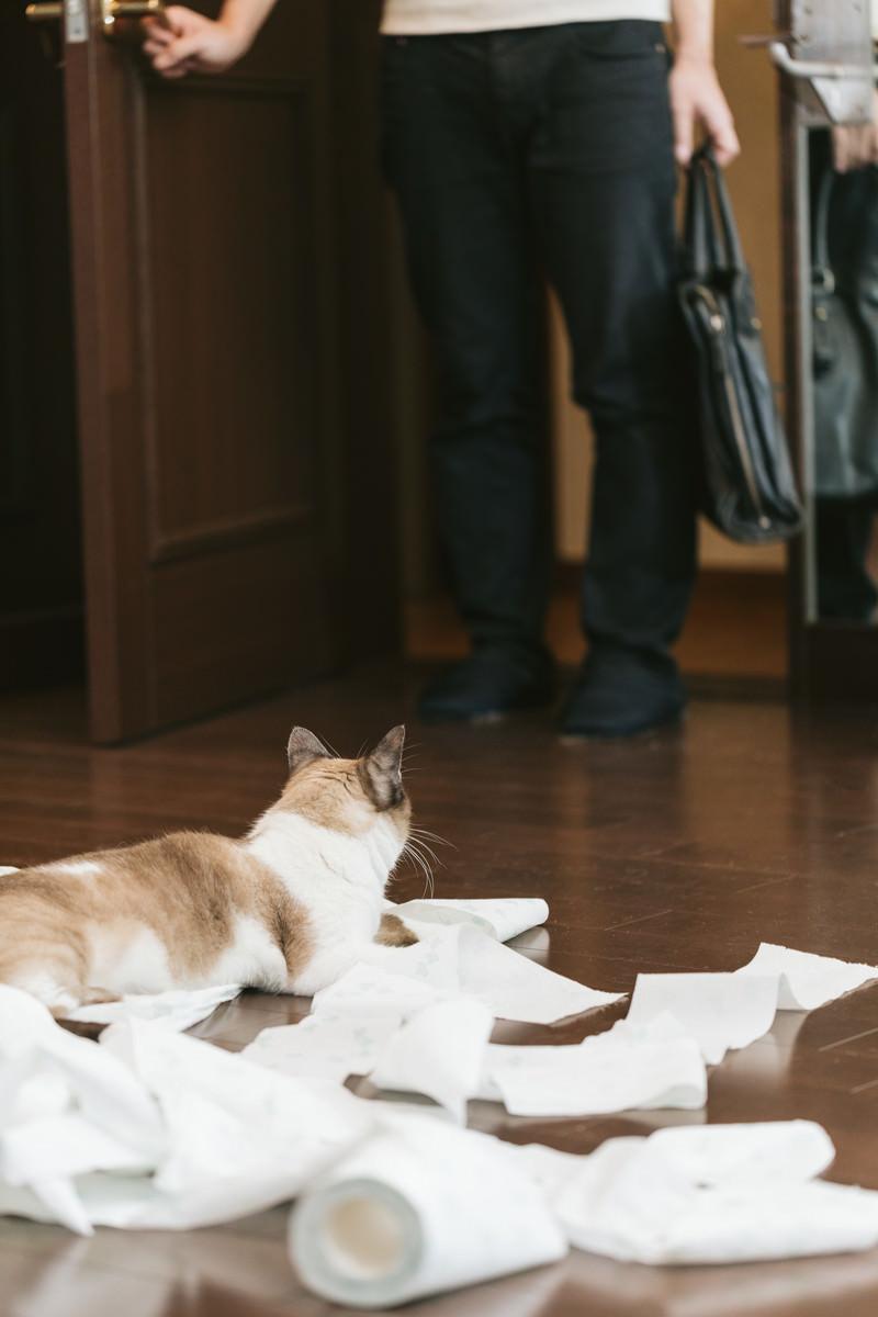 「帰宅したら猫がティッシュでいたずらしていた帰宅したら猫がティッシュでいたずらしていた」のフリー写真素材を拡大