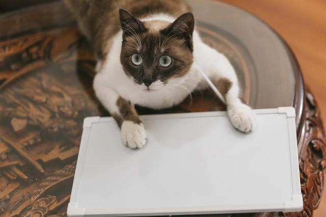 首からプレートを下げた猫の写真