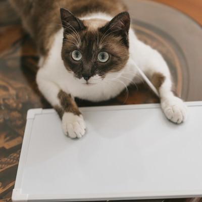「首からプレートを下げた猫」の写真素材