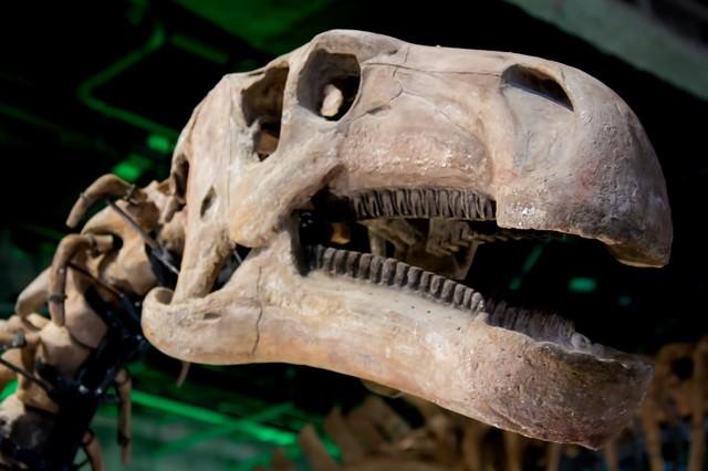 恐竜の骨格標本の写真