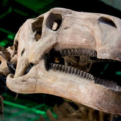 「恐竜の骨格標本」の写真素材