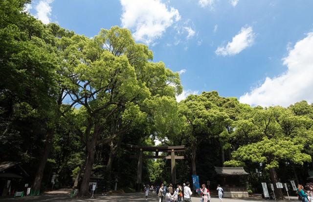 明治神宮入り口(鳥居)の写真
