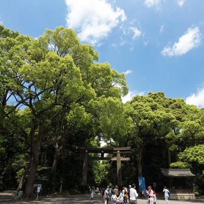 「明治神宮入り口(鳥居)」の写真素材