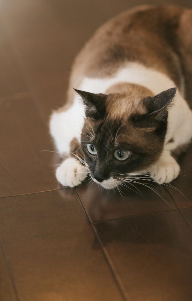 猫特有の丸くなるポーズの写真