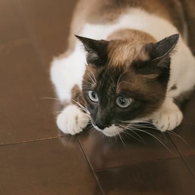 「猫特有の丸くなるポーズ」の写真素材