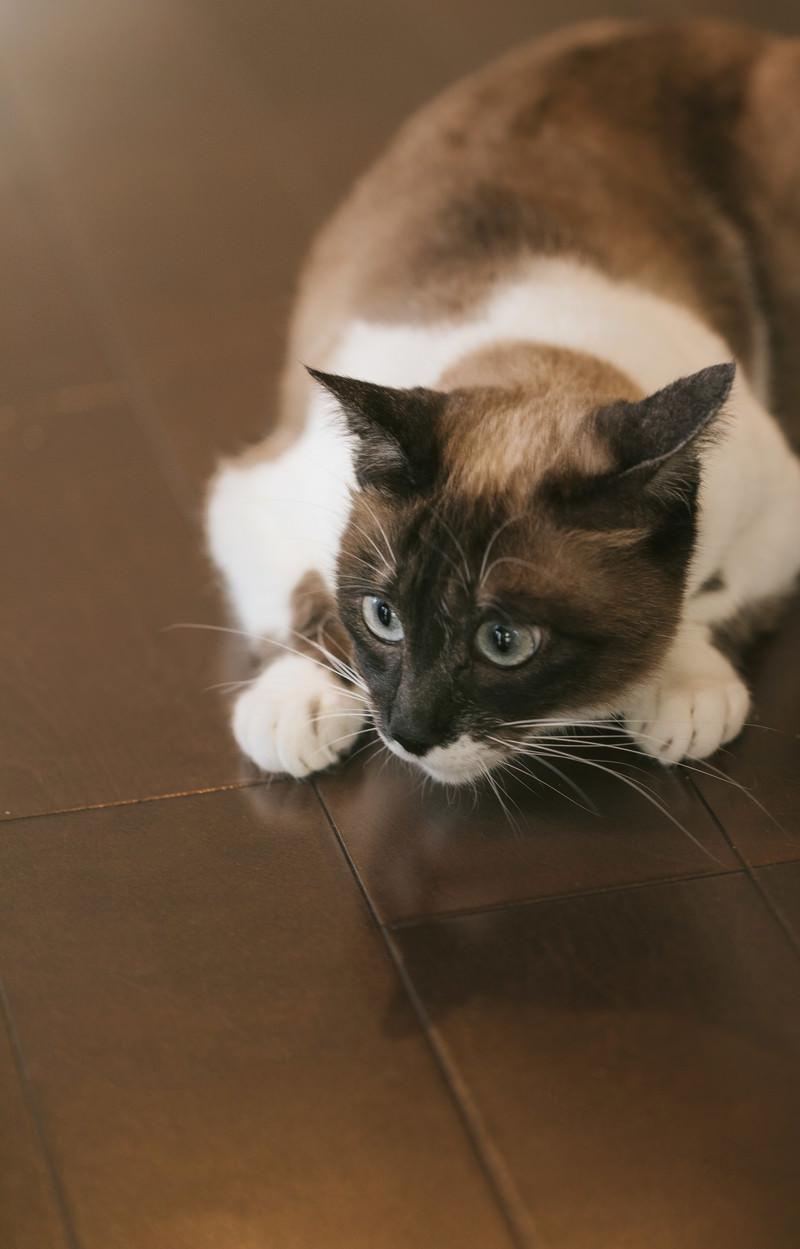 「猫特有の丸くなるポーズ」の写真