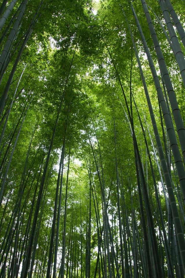 竹林の写真