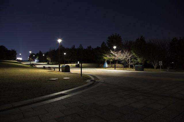 深夜の葛西臨海公園の写真