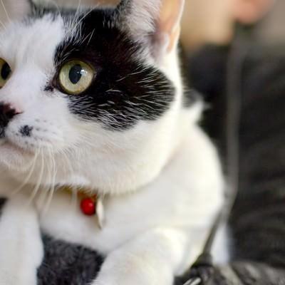 「抱っこされる猫」の写真素材