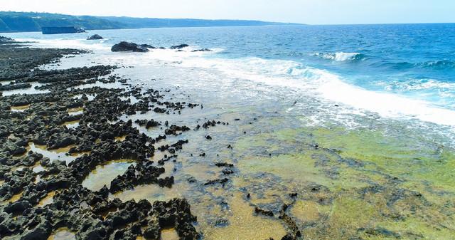 隆起サンゴ礁が続く犬田布海岸の写真