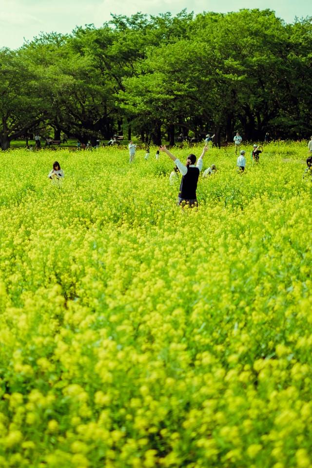 満開の菜の花畑と楽しむ人たちの写真
