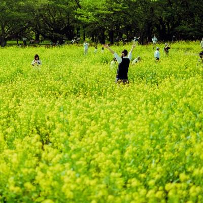 「満開の菜の花畑と楽しむ人たち」の写真素材