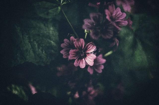 薄暗い花の写真