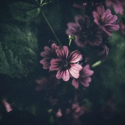 「薄暗い花」の写真素材