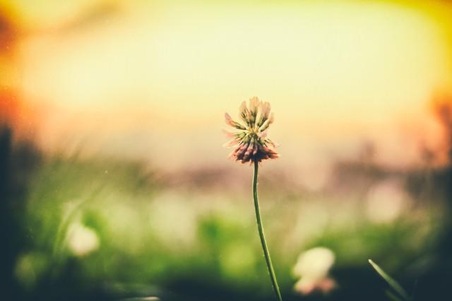 夕焼けと野に咲く花の写真