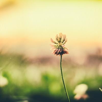 「夕焼けと野に咲く花」の写真素材