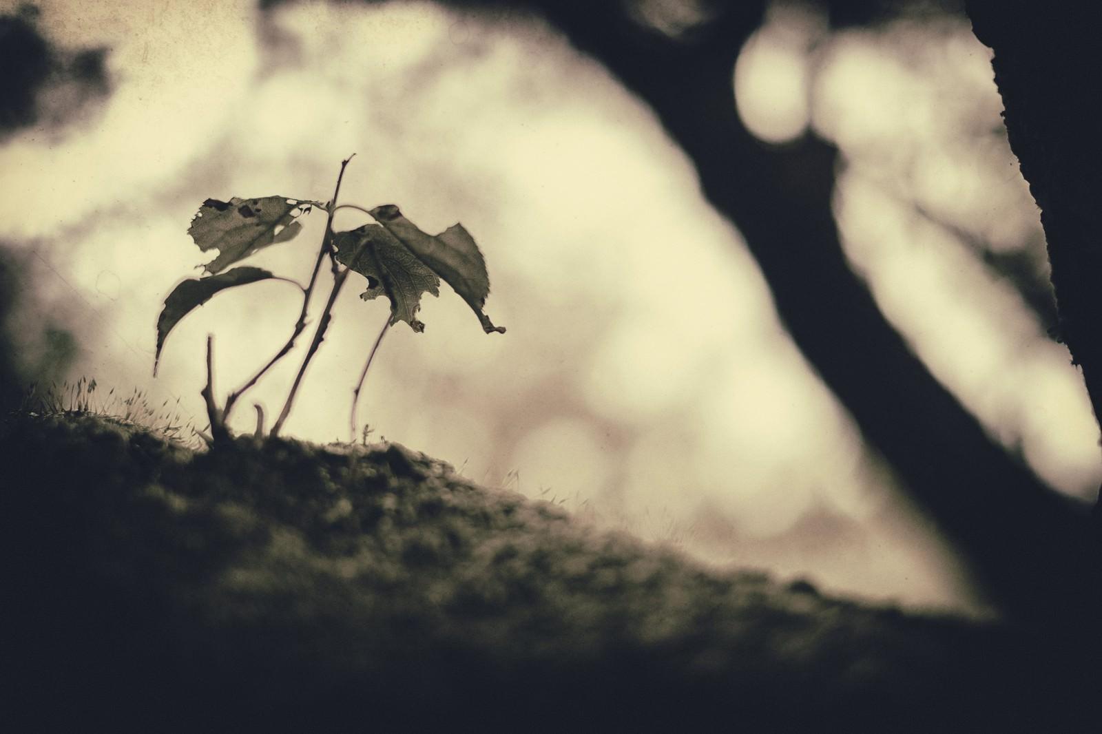 「枯れた植物」の写真