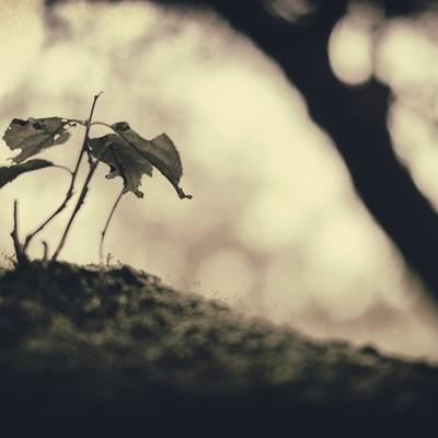 「枯れた植物」の写真素材