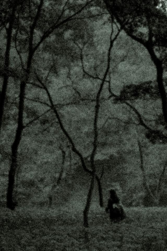 樹海でさまよう人影の写真