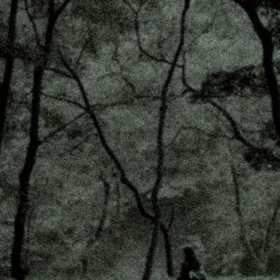 「樹海でさまよう人影」の写真素材