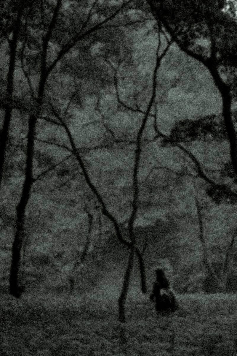 「樹海でさまよう人影」の写真