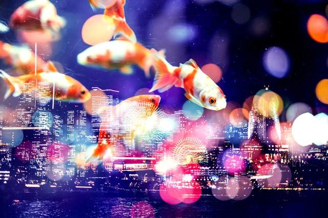 夜空を優雅に泳ぐ金魚(フォトモンタージュ)の写真