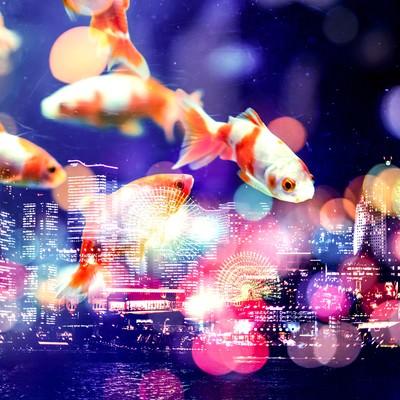 「夜空を優雅に泳ぐ金魚(フォトモンタージュ)」の写真素材