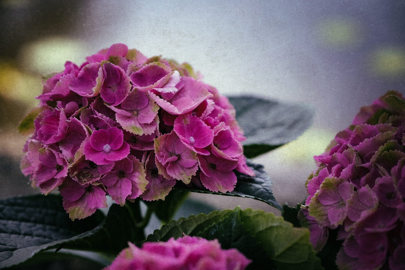 「不安定な空とあじさいの花」の写真