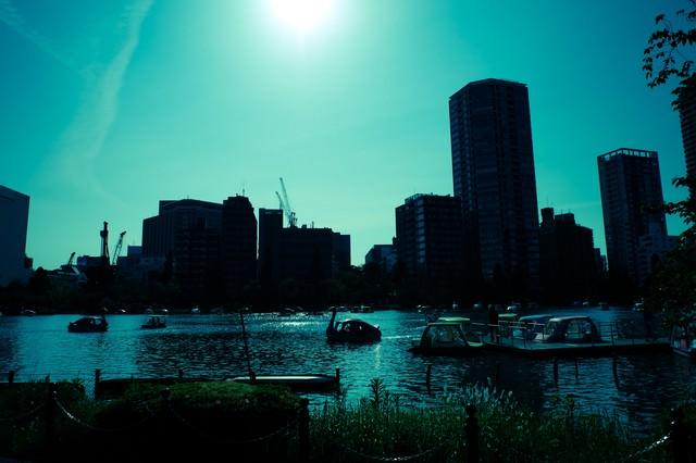 日差しとスワンボートの写真