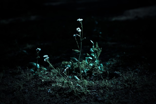 暗闇と路肩の雑草の写真