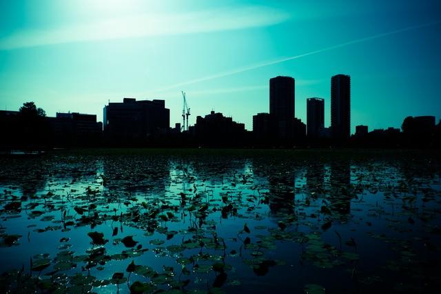 蓮の池と都会のシルエットの写真