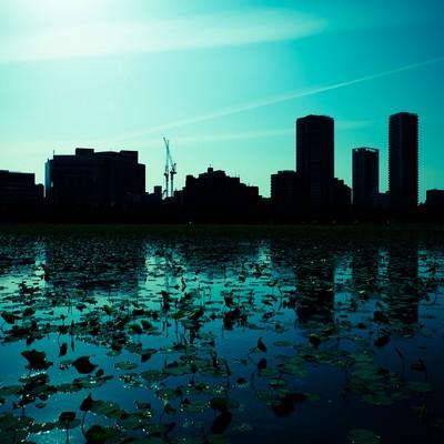 「蓮の池と都会のシルエット」の写真素材