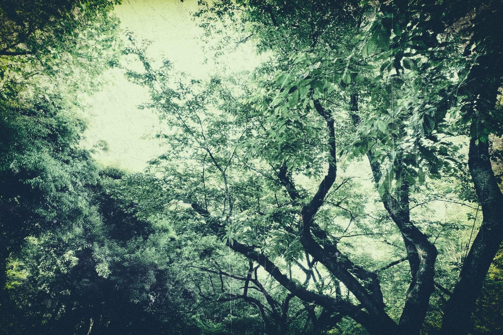 「色あせた木々色あせた木々」のフリー写真素材を拡大
