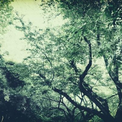 「色あせた木々」の写真素材