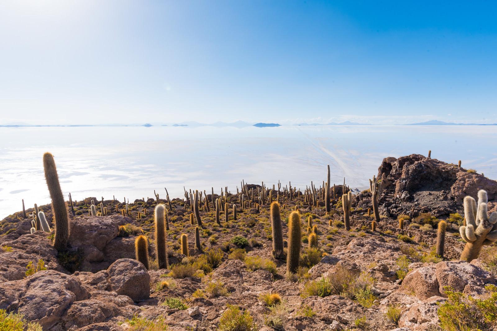 「ウユニ塩湖とサボテンの山」の写真