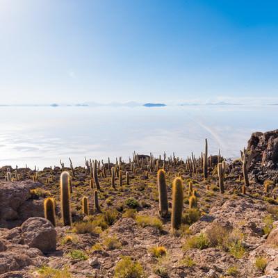 ウユニ塩湖とサボテンの山の写真