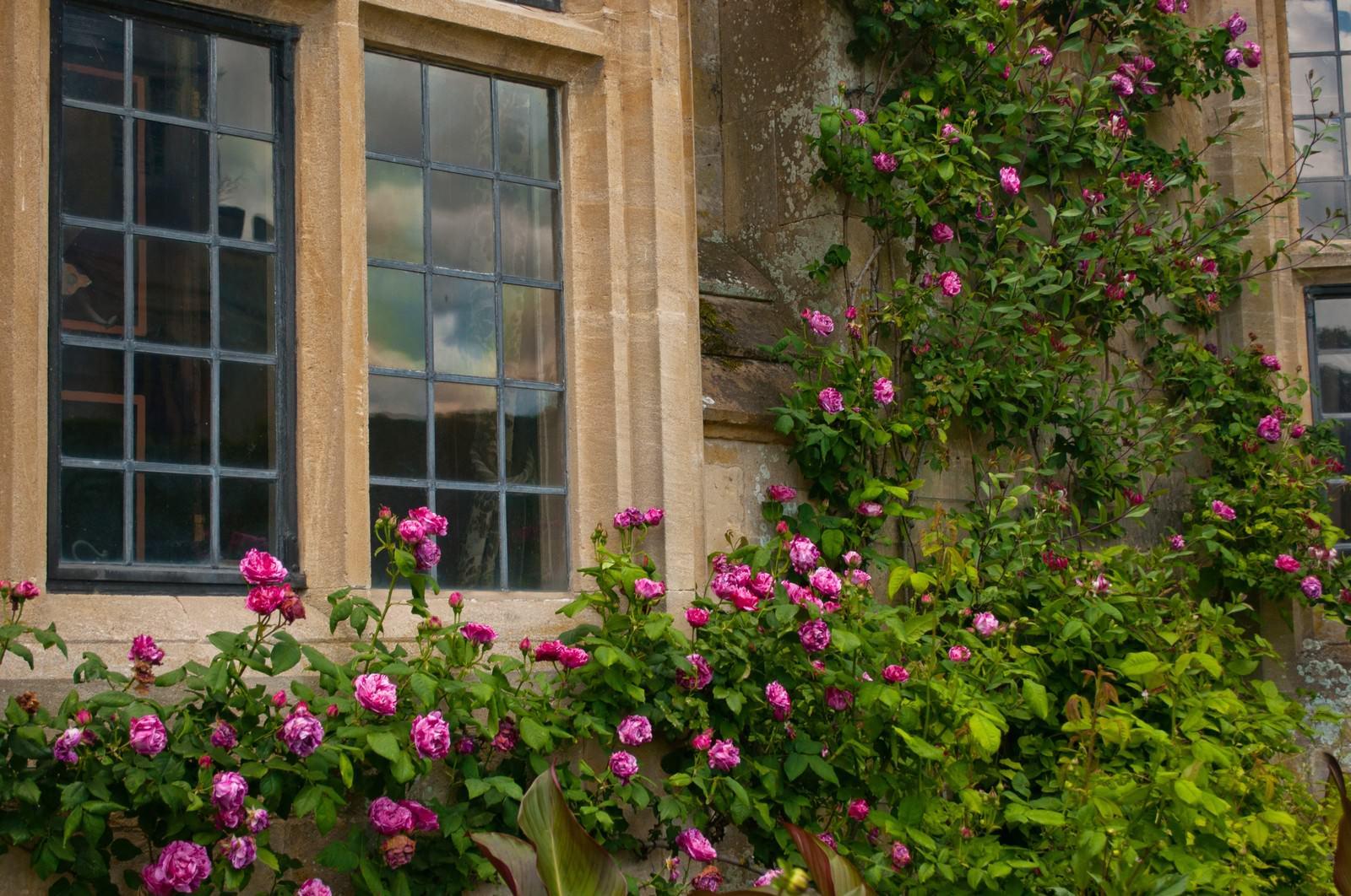「スードリー城の古風な窓」の写真