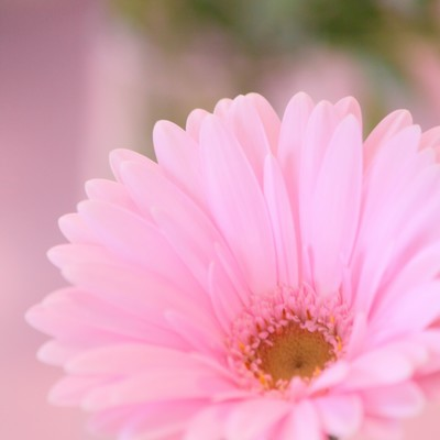 「花とピンク色のガーベラ」の写真素材