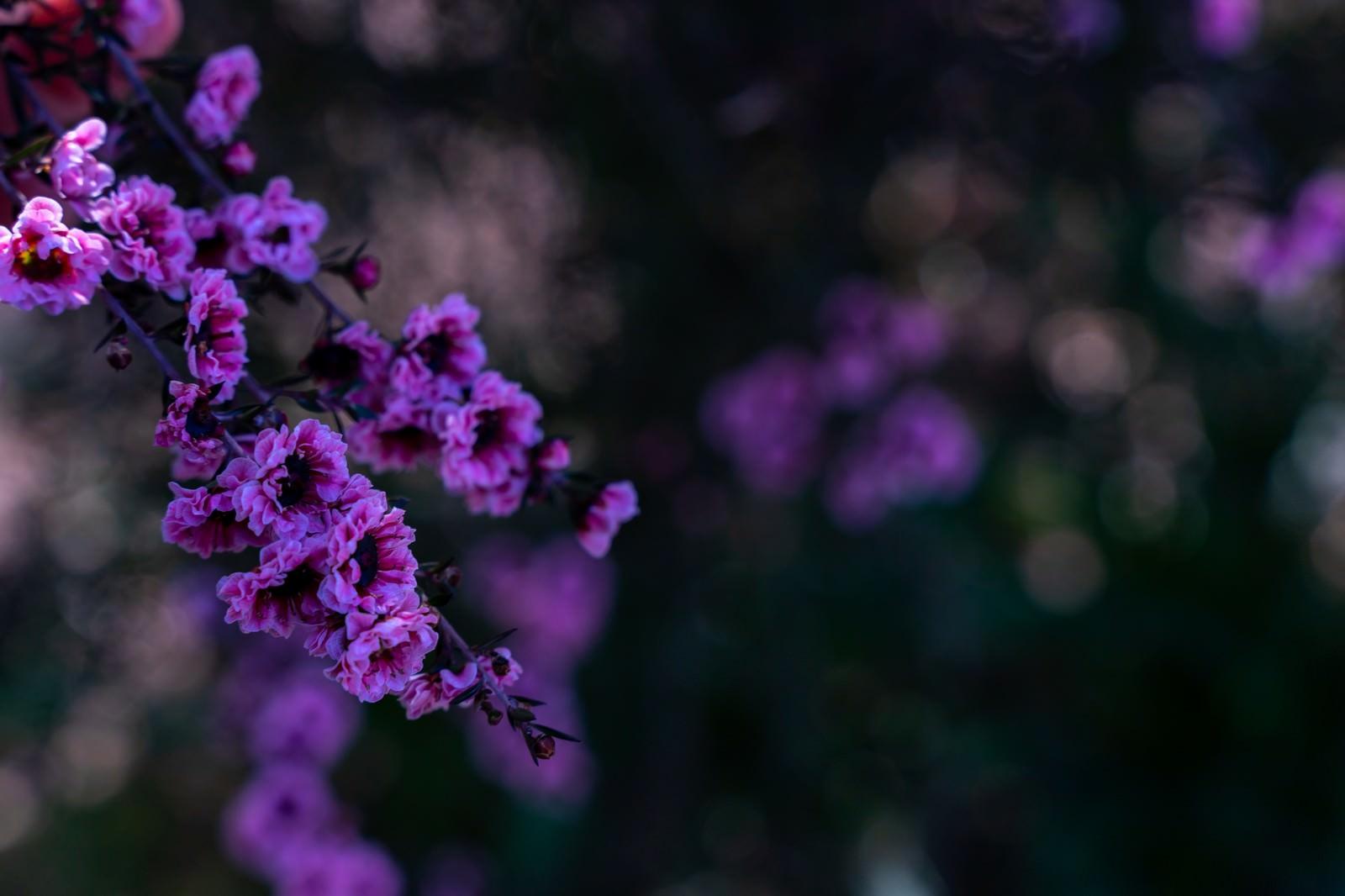 「日陰に咲く花木と玉ボケ」の写真
