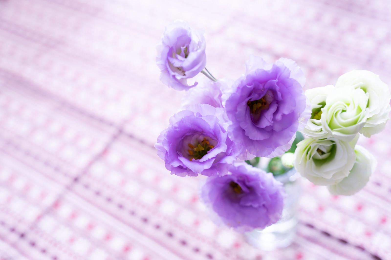 「紫と白の花(トルコキキョウ)」の写真