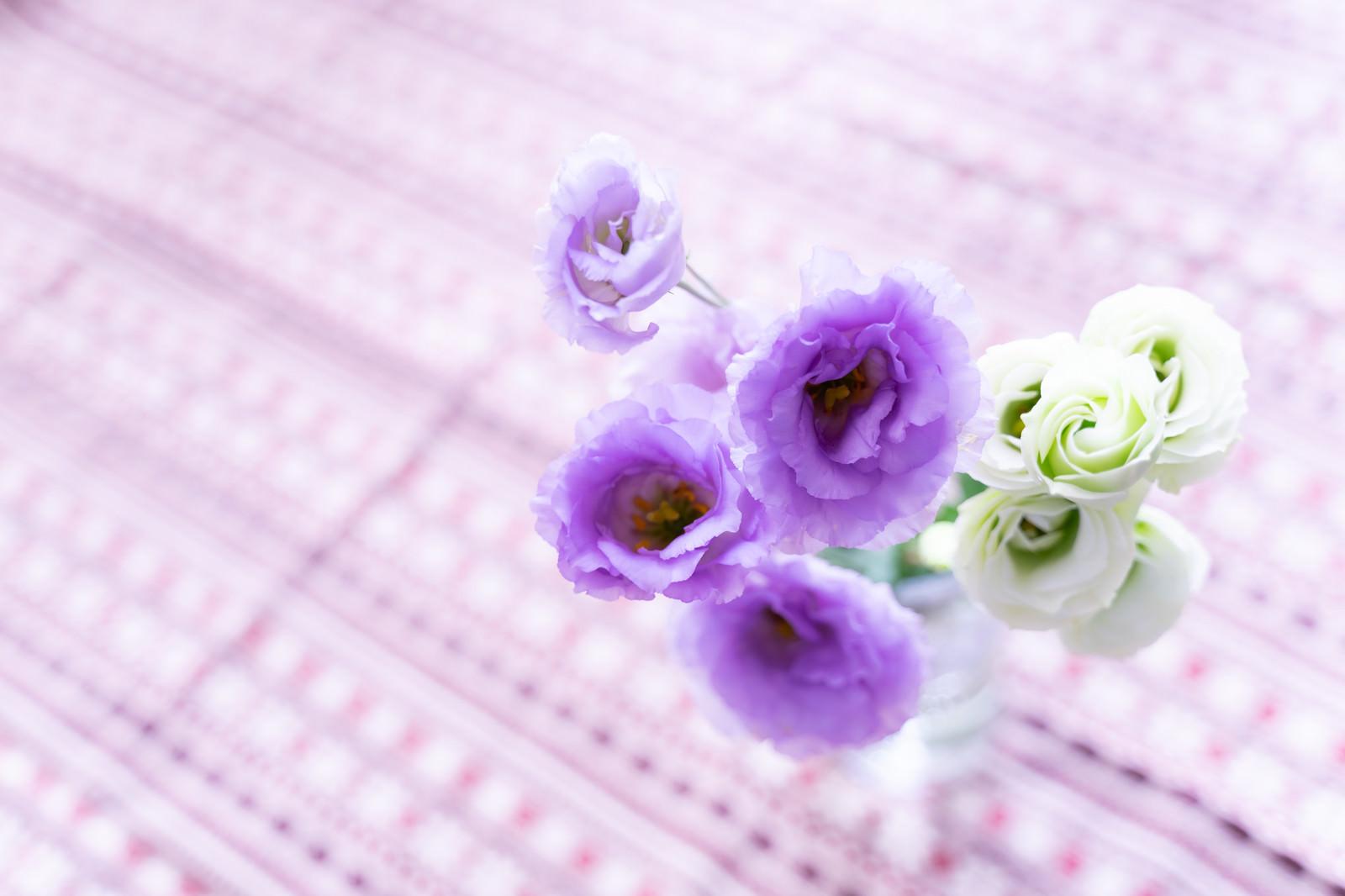 「八重咲きのトルコキキョウ」の写真